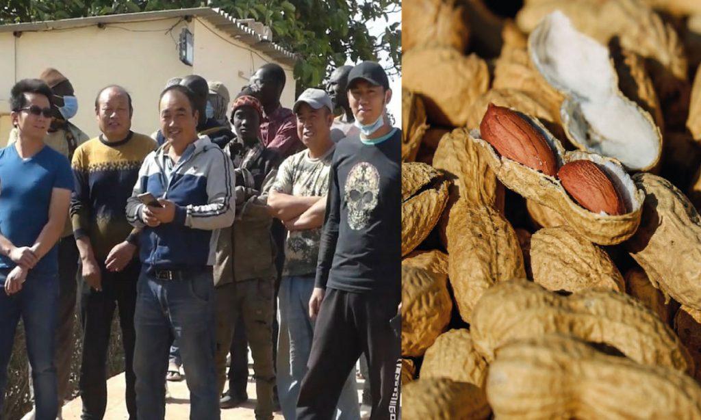 Main basse chinoise sur l'arachide sénégalaise: du désordre dans la filière aux soupçons de blanchiment de capitaux